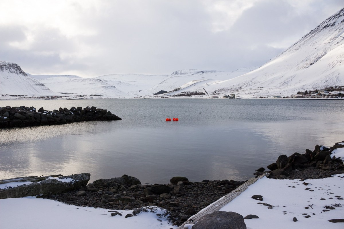 The Wild Westfjords: A Whistle-Stop Tour Of Ísafjörður And Súðavík