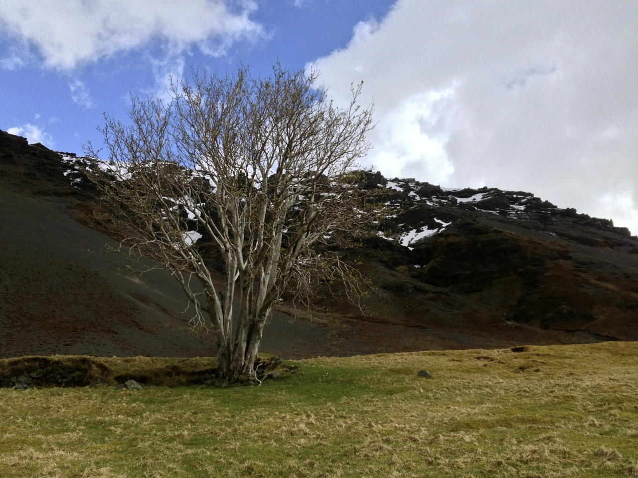 Iceland's Best Tree Of 2015 Award Announced