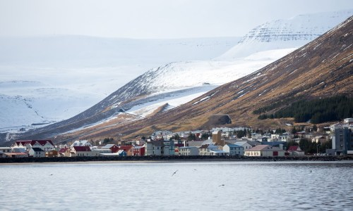 Ísafjörður Town Guide: Feeding Foxes and Seafood To Die For