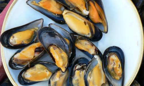 Hvalfjörður Mussels Riddled With Poison