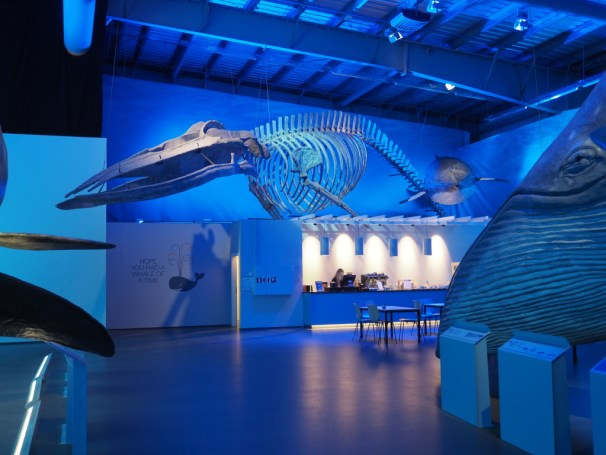 A whale skeleton at the exhibition Whales of Iceland