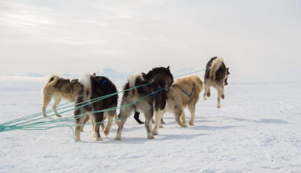 Ittoqqortoormiit Greenland. Photo by Ryan Parteka.