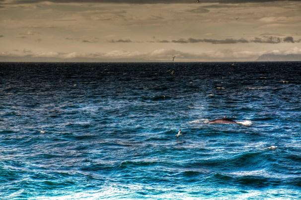 Ryan_Parteka-whale watching-02