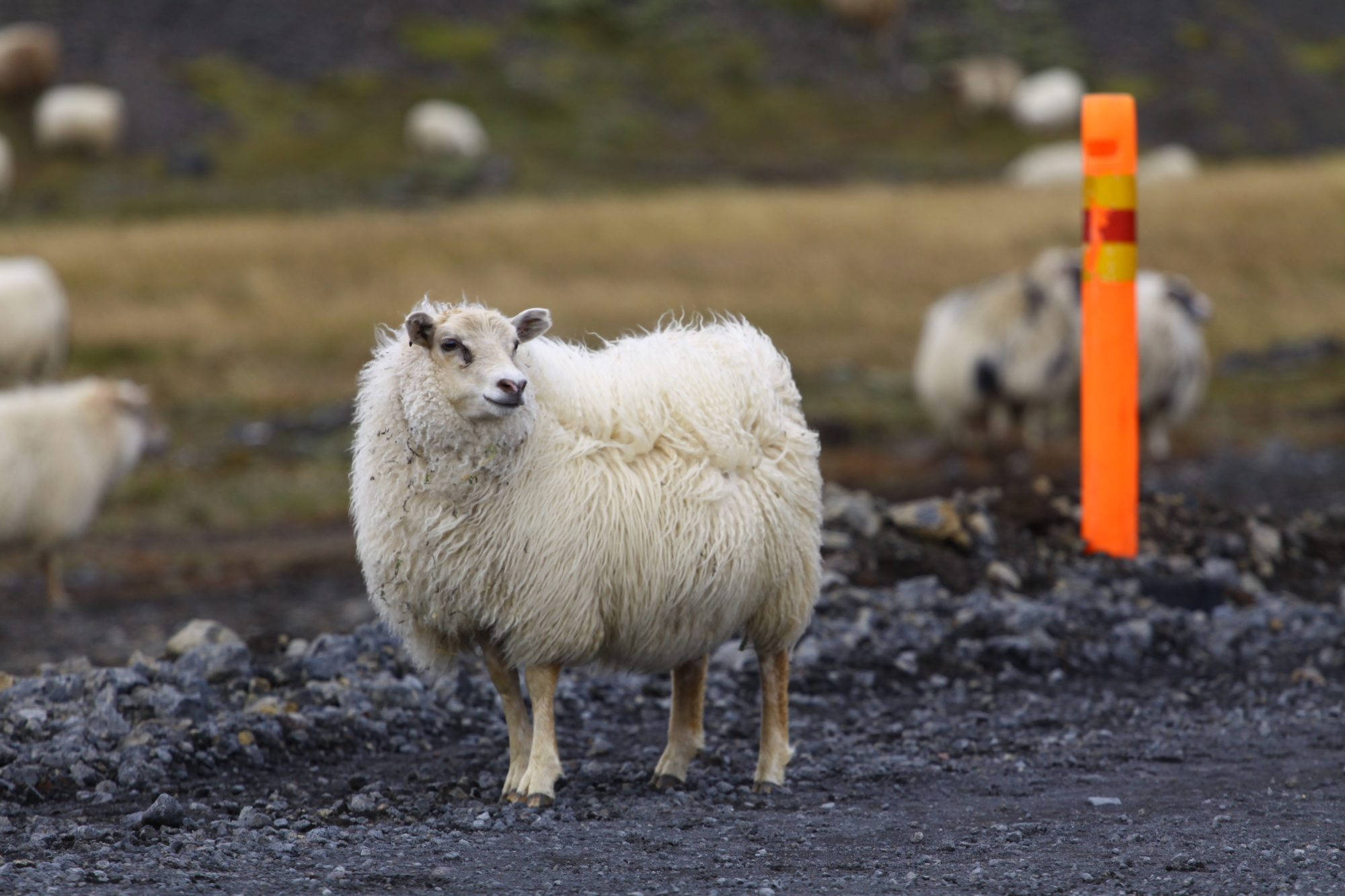 Protest At Icelandic Slaughterhouse Prompts Counter, And Counter-Counter, Protests