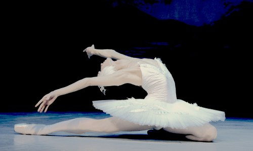 Swan Lake Without The Swan Song