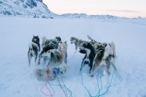 Greenland Dogs by Axel Sig
