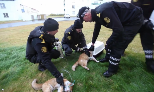 Police Save The Lives Of Three Cats – VIDEO