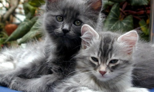 Suspected Catnappings In North Iceland