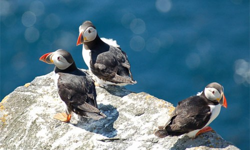 CONFLICT, STRIFE, TURMOIL, MAJESTIC WATERFALLS & CUTE PUFFINS: An Editorial