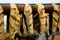 Drying lumpfish.