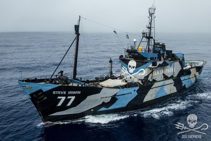 Barco de Sea Shepherd (Fuente:The Reykjavic Grapevine)
