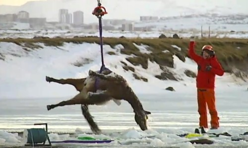 Twelve Horses Found Dead In Ice-Covered Pond