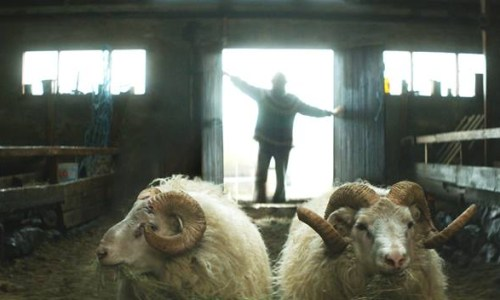 """Rams"" Iceland's Entry For Best Foreign Language Oscar"