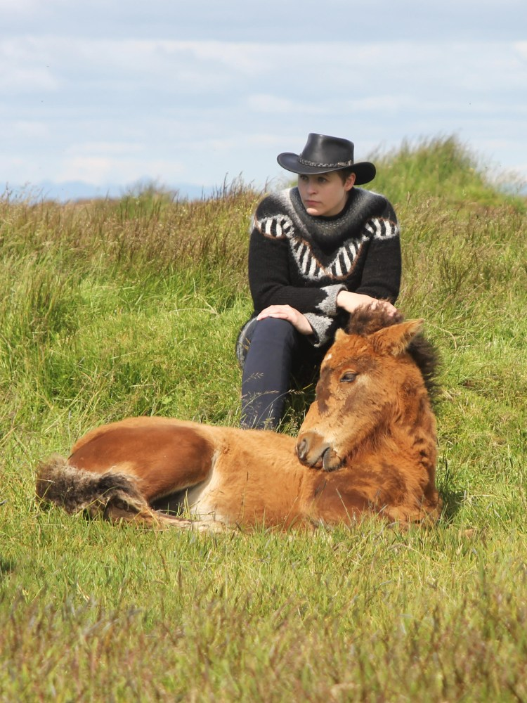 Ask A Geneticist: Why Do Icelandic Horses Have More Gaits Than Most Horse Breeds?