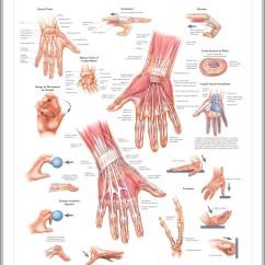 Human Hand Skeleton Diagram 7 Pin Trailer Wiring Flat Graph