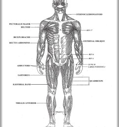 blank diagram of the human body diagram chart diagrams and charts with labels this diagram depicts blank diagram of the human body [ 799 x 1084 Pixel ]