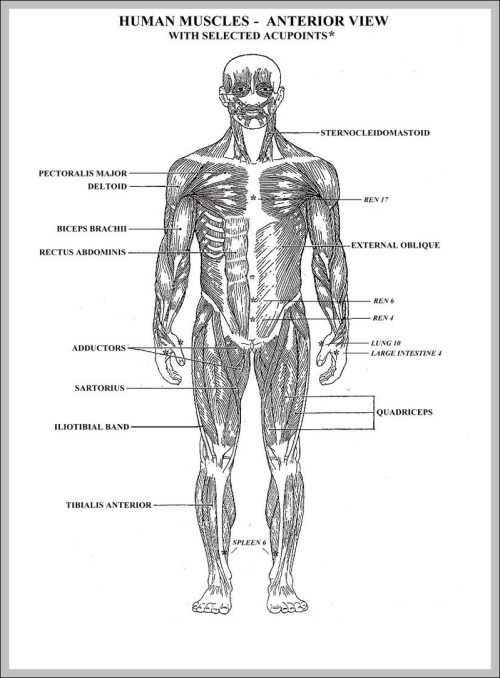 small resolution of blank diagram of the human body diagram chart diagrams and charts with labels this diagram depicts blank diagram of the human body