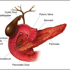 Pancreas Anatomy Diagram 1999 Ford Mustang Gt Radio Wiring Gallbladder Graph