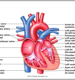 heart right atrium diagram chart diagrams and charts with labels this diagram depicts heart right atrium [ 1223 x 879 Pixel ]