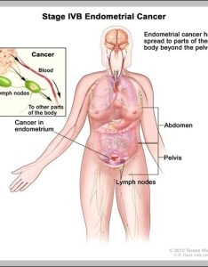 Lymph nodes groin female diagram chart diagrams and charts with labels this depicts also node graph rh graphdiagram