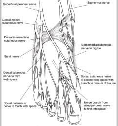 nervous system diagram graph diagram diagram of nerves in human body diagram of nerves in human body [ 1045 x 1231 Pixel ]