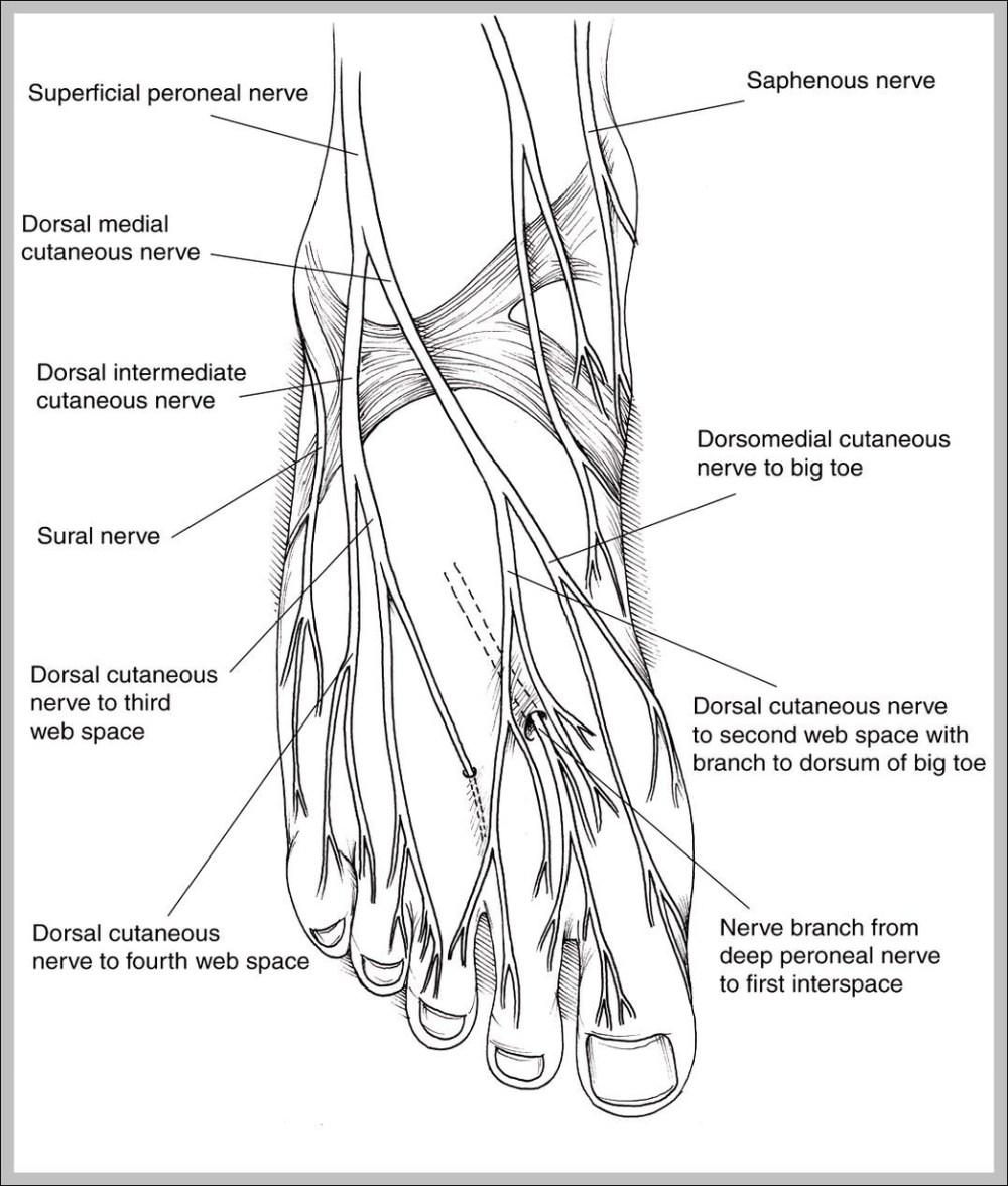 medium resolution of nervous system diagram graph diagram diagram of nerves in human body diagram of nerves in human body