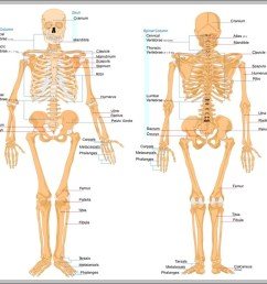 picture of bones in body diagram chart diagrams and charts with labels this diagram depicts picture of bones in body [ 999 x 912 Pixel ]