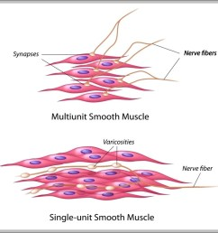 pictures of muscle cells diagram chart diagrams and charts with labels this diagram depicts pictures of muscle cells [ 1022 x 991 Pixel ]