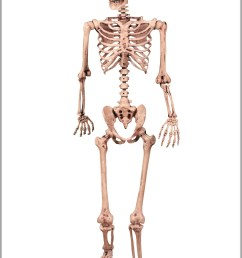skeletal pictures diagram chart diagrams and charts with labels this diagram depicts skeletal pictures [ 1727 x 2378 Pixel ]