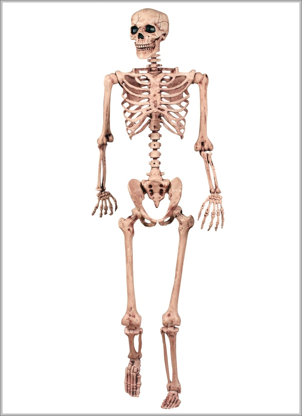 medium resolution of skeletal pictures diagram chart diagrams and charts with labels this diagram depicts skeletal pictures