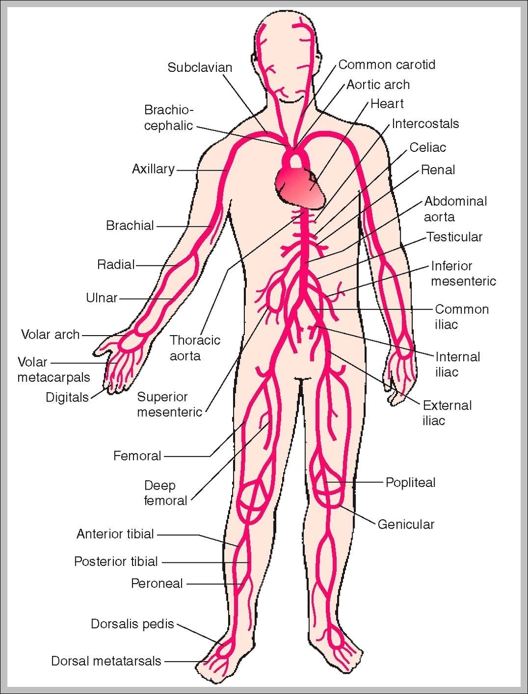 hight resolution of system of the body diagram chart diagrams and charts with labels this diagram depicts system of the body