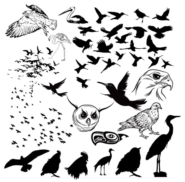 A Variety Of Birds And Silhouettes Vector Graphic| Graphic