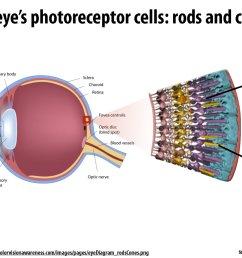 diagram of blood vessel slide [ 1600 x 1200 Pixel ]