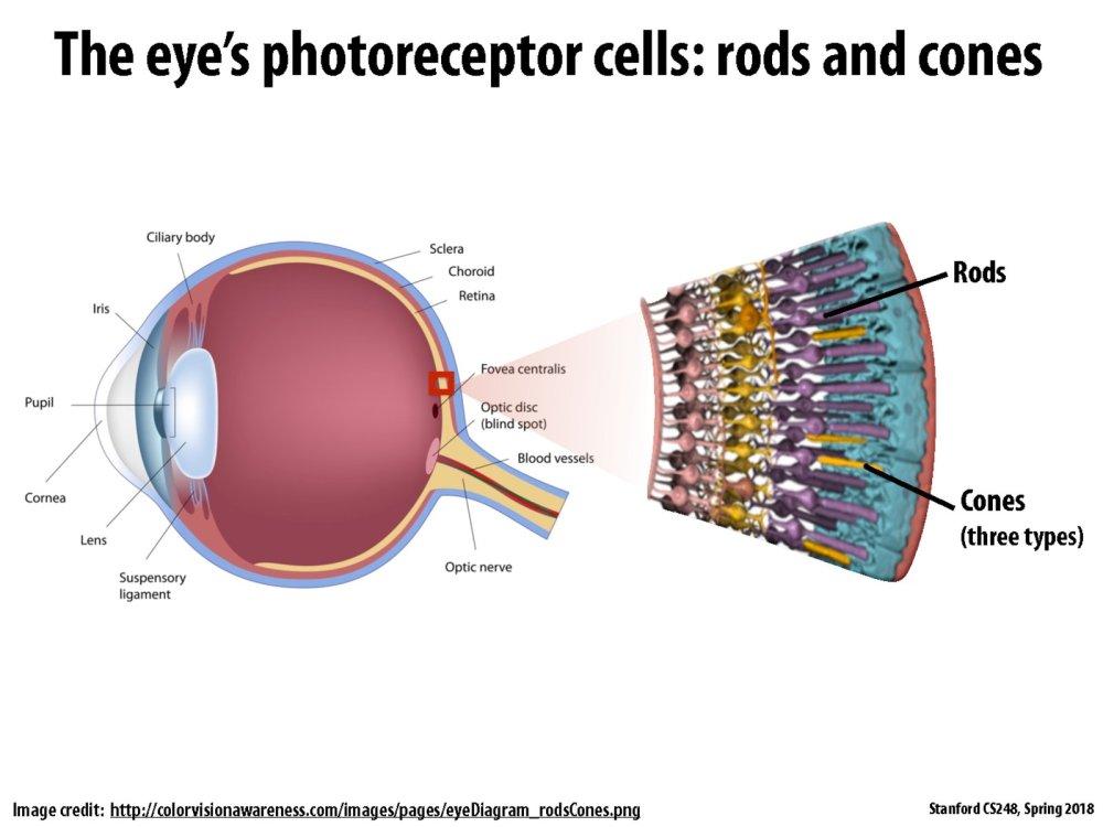 medium resolution of diagram of blood vessel slide