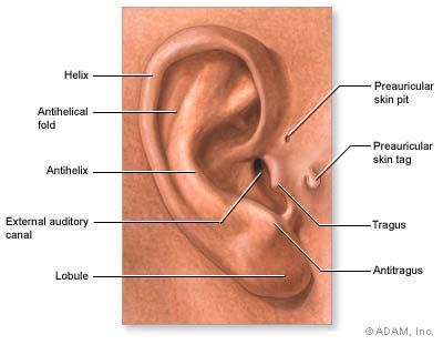different ear piercings diagram 2001 jeep cherokee wiring the new york times > health image medical findings based on anatomy