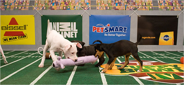 Last Year's Puppy Bowl