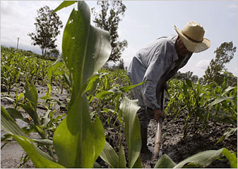 A rare sight? A post-NAFTA campesino