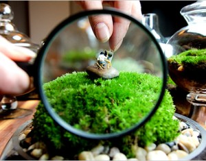 How To Make A Tiny Terrarium In