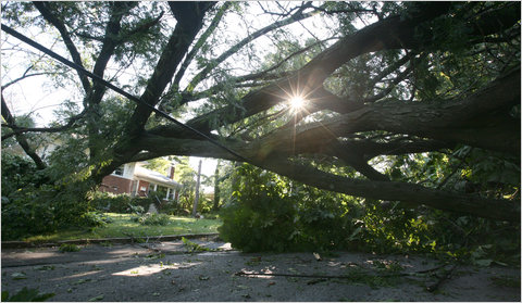 West 254th Street in Riverdale Monday morning, in the wake of Sunday's tornado.
