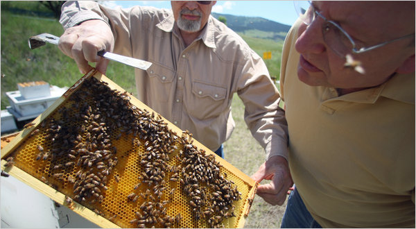Article on the dangers facing our bee populations