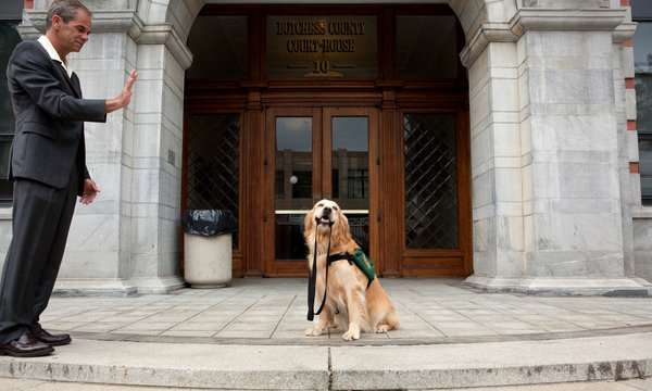 Court Dog