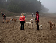 Jason Henry for The Bay Citizen  Dog walkers and their charges in a leash-free zone of Fort Funston. DogPAC represents dozens of dog lovers' groups.