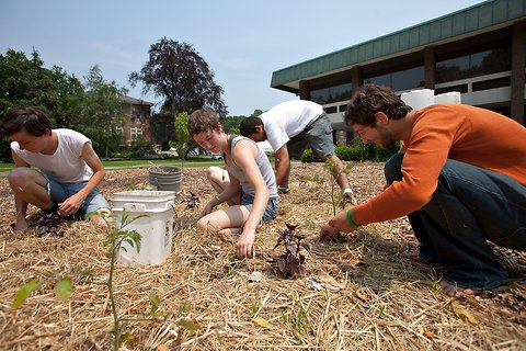 Students at the University of Massachusetts Amherst planting tomatoes in a garden on campus.