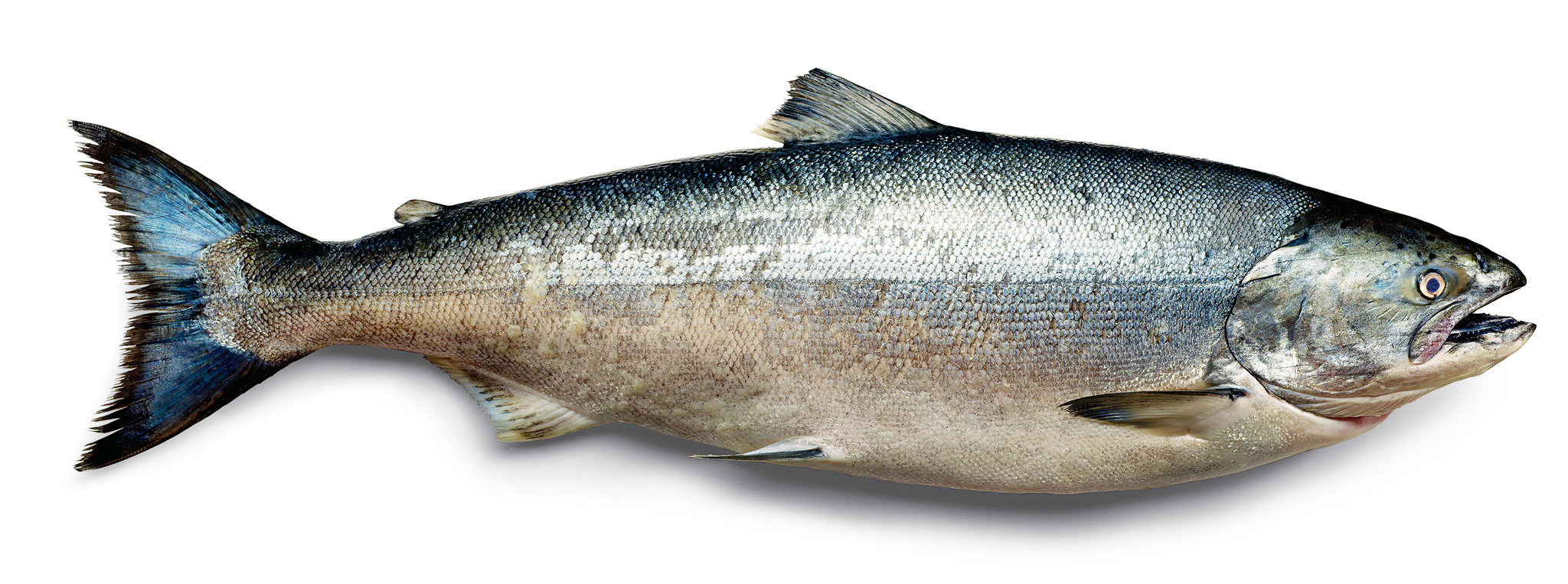Salmon for younger skin