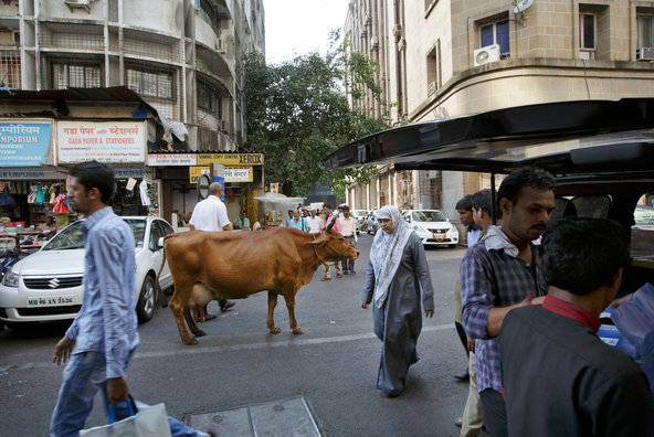 nytimes india mumbai street cow cars city life
