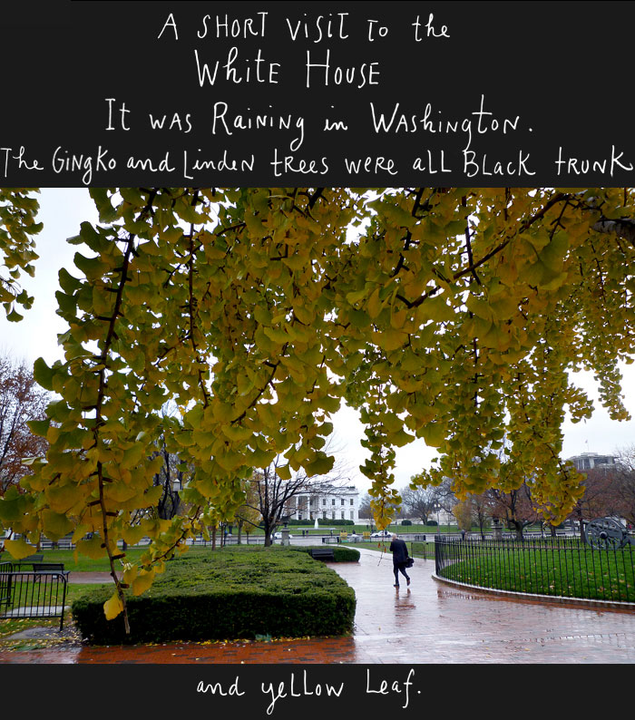 A Short Visit to the White House<br /> It was raining in Washington.<br /> The linden trees were all black trunk and yellow leaf.<br />