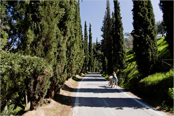 A cypress-lined road leads to Mount Hymettus, which ancient Greeks believed to be the source of honey.