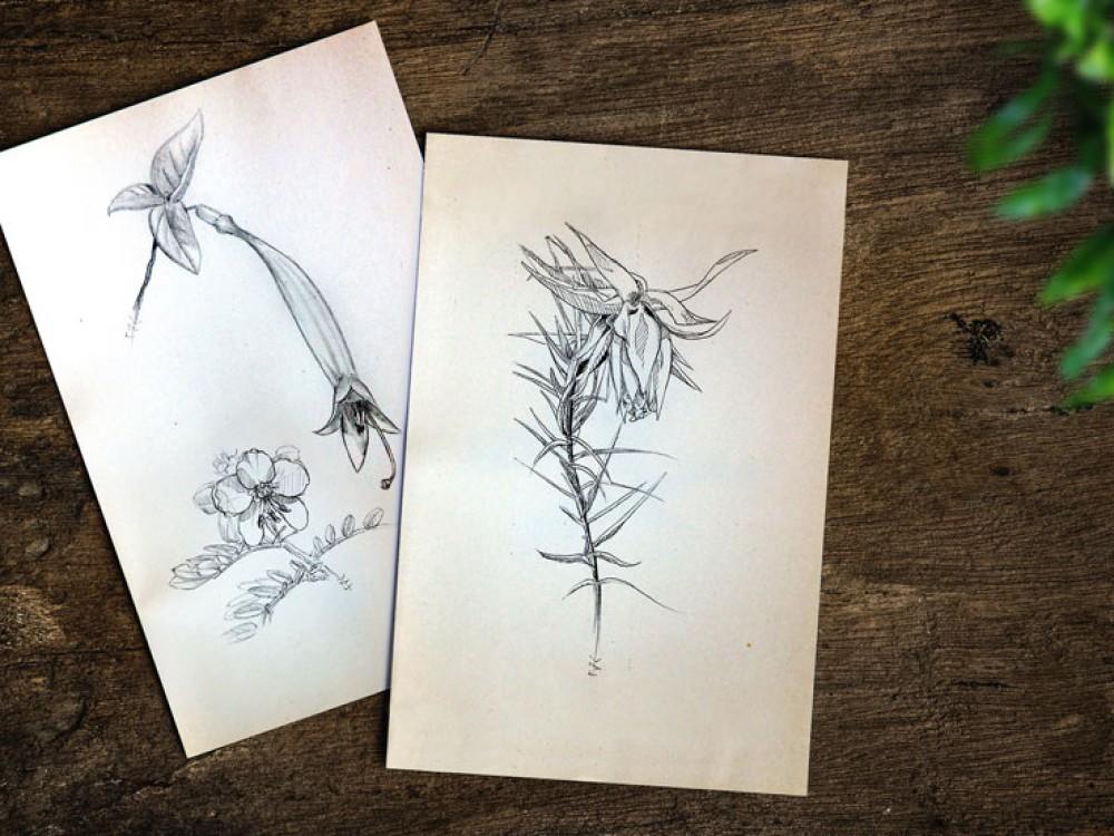 croquis fleurs biologie perou noir et blanc