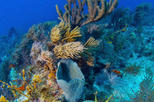 Key West Shore Excursion: Reef Express Snorkeling Tour