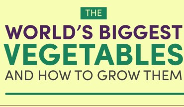 World's Biggest Vegetables and How to Grow Them - Infographic